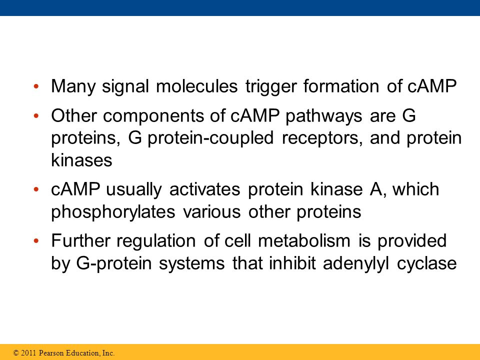 Many signal molecules trigger formation of cAMP