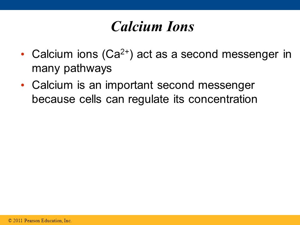 Calcium Ions Calcium ions (Ca2+) act as a second messenger in many pathways.