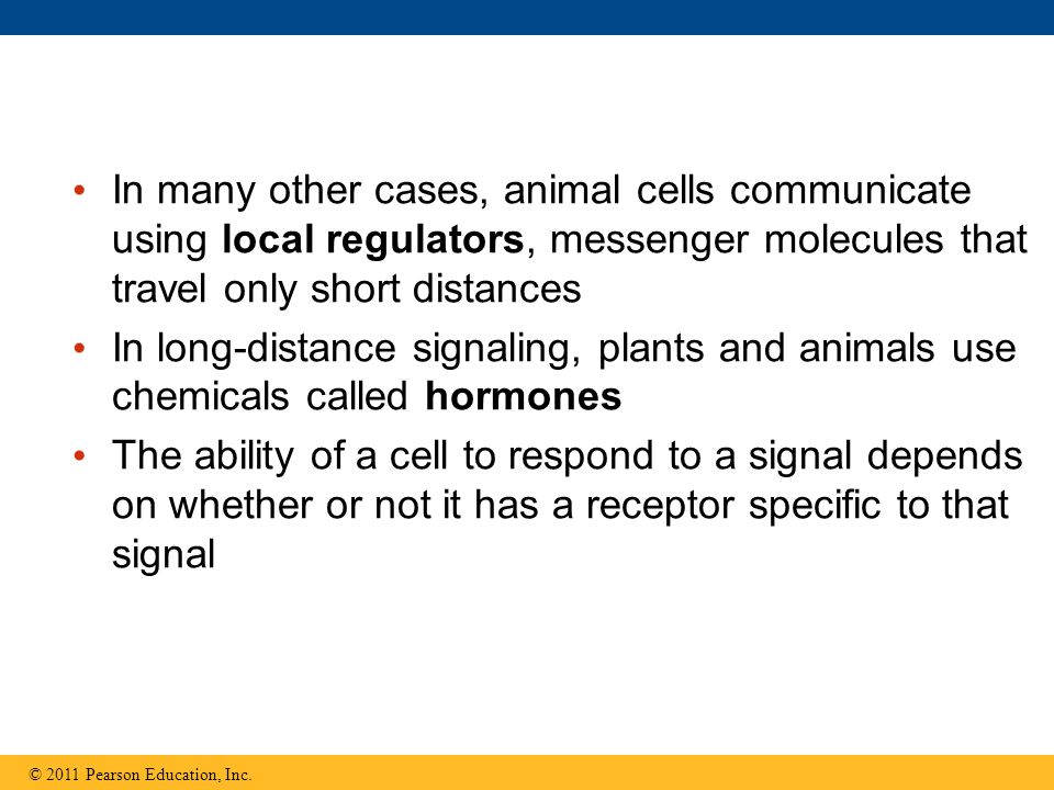 In many other cases, animal cells communicate using local regulators, messenger molecules that travel only short distances