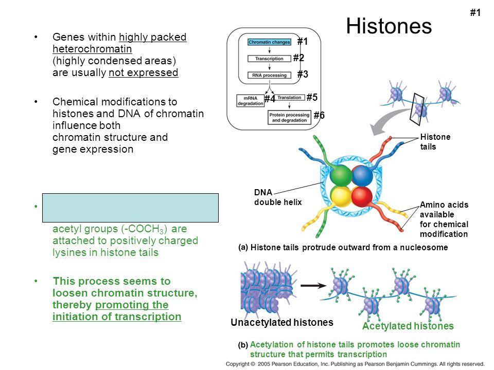 #1 Histones.