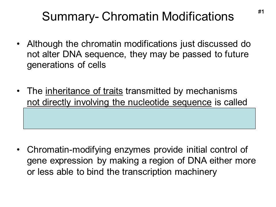 Summary- Chromatin Modifications