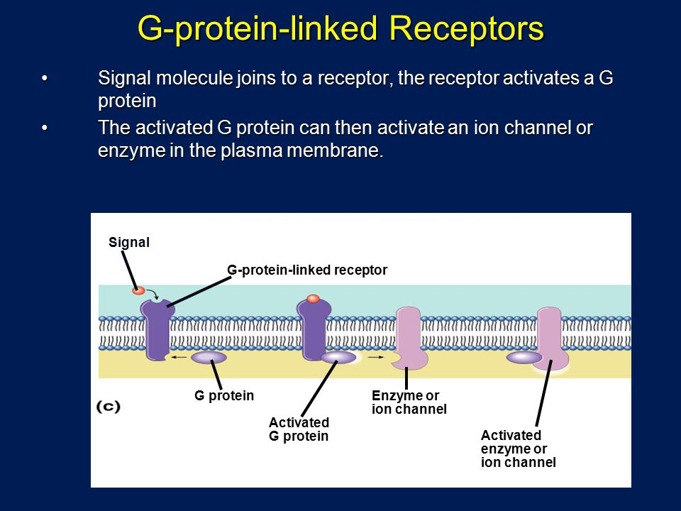 G-protein-linked Receptors