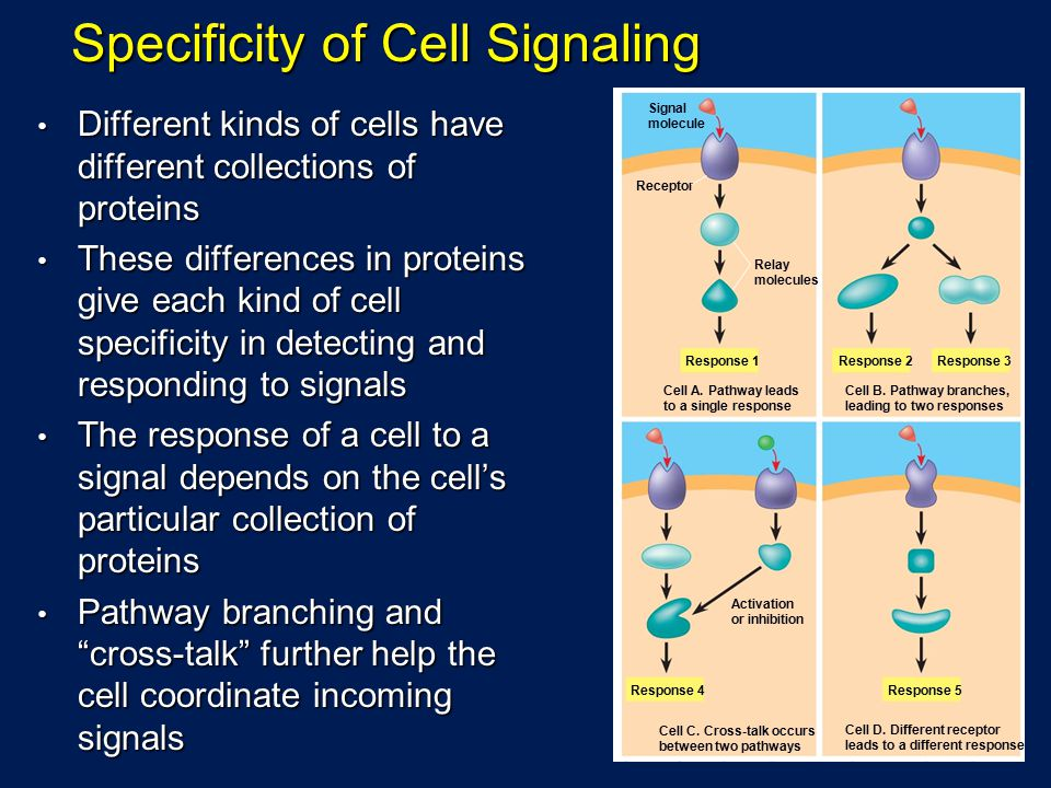 Specificity of Cell Signaling