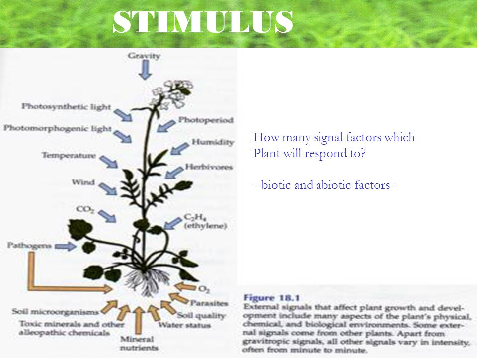 STIMULUS How many signal factors which Plant will respond to