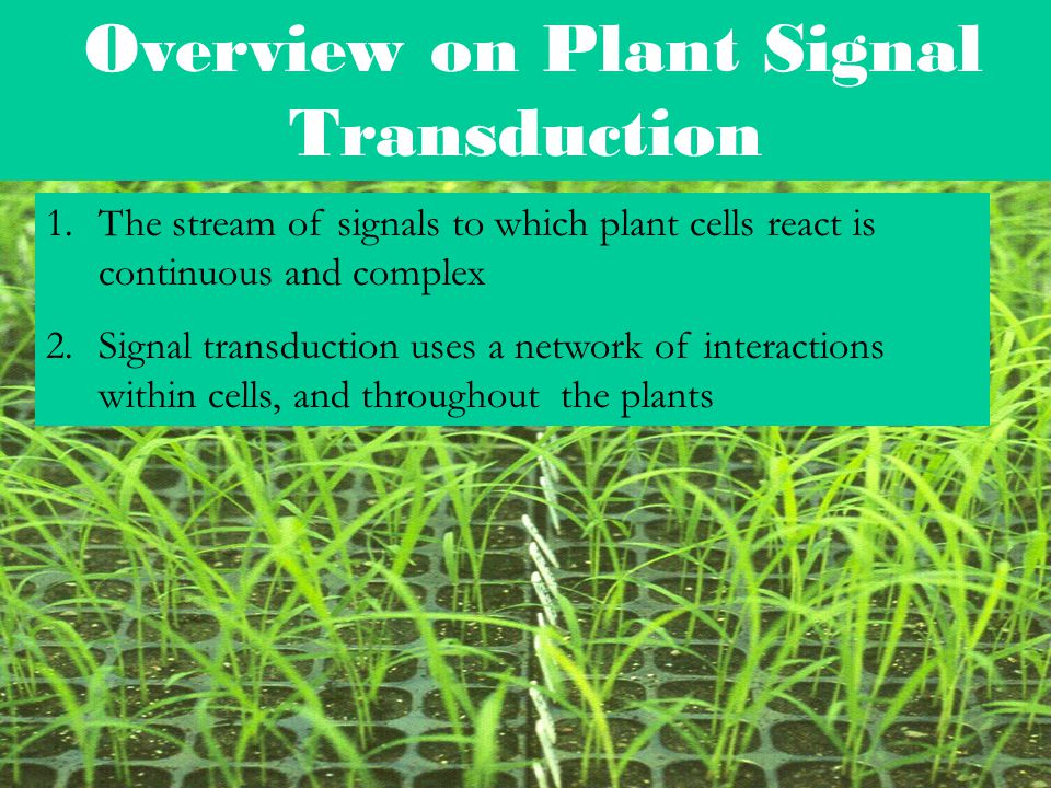 Overview on Plant Signal Transduction