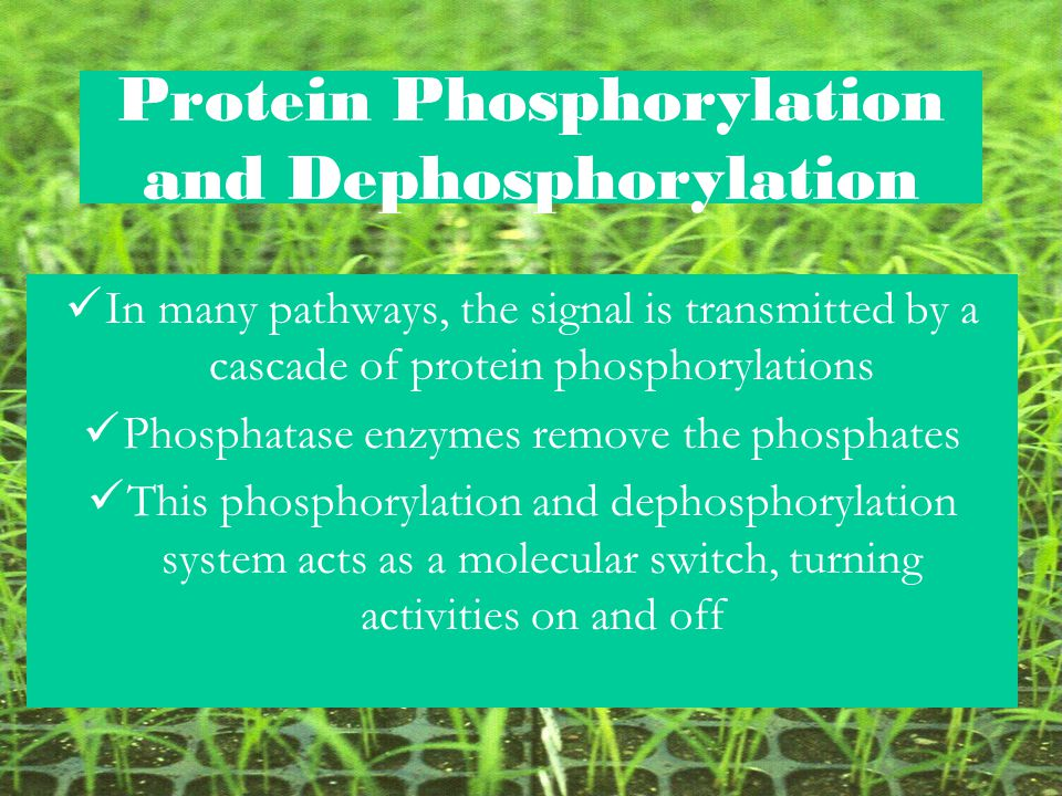 Protein Phosphorylation and Dephosphorylation
