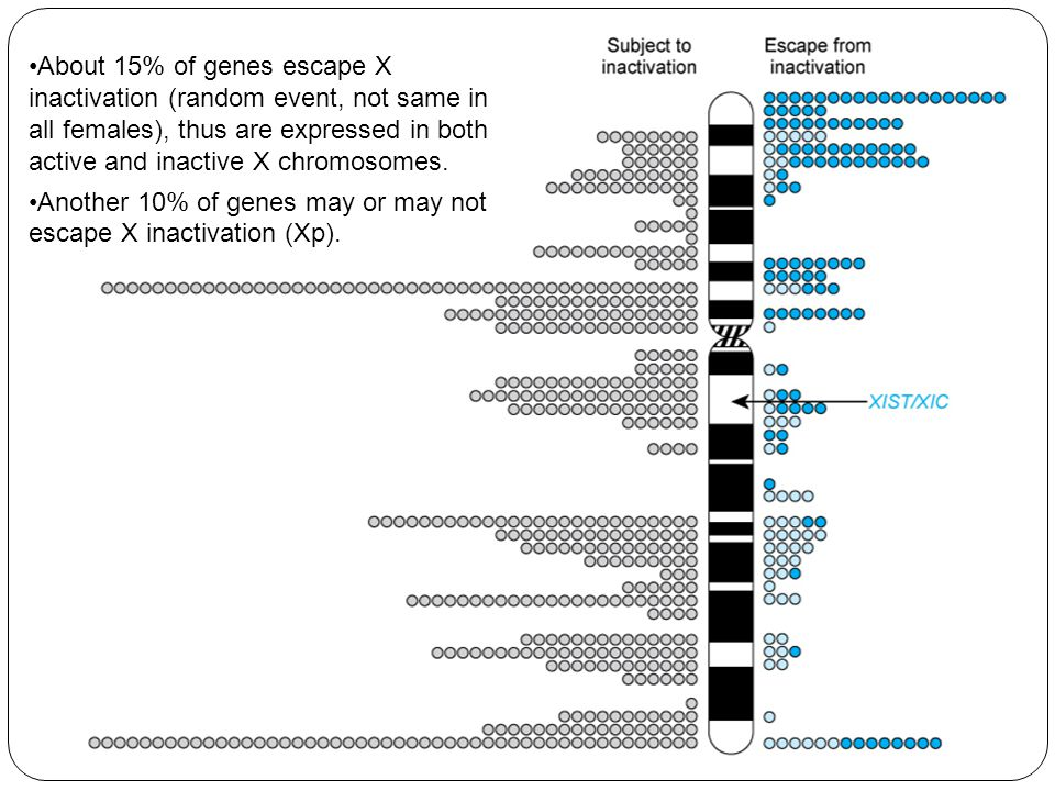 About 15% of genes escape X inactivation (random event, not same in all females), thus are expressed in both active and inactive X chromosomes.
