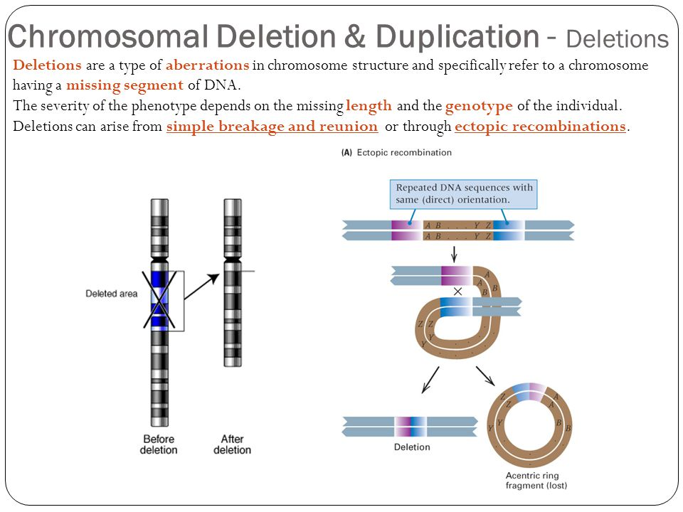 Chromosomal Deletion & Duplication - Deletions