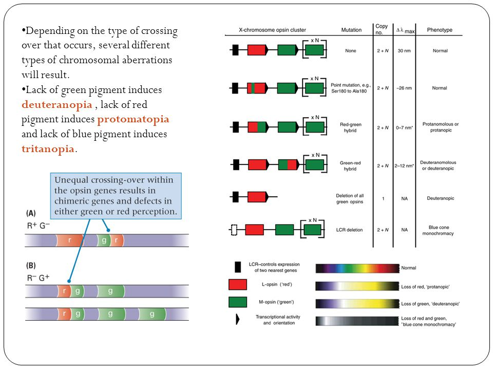 Depending on the type of crossing over that occurs, several different types of chromosomal aberrations will result.