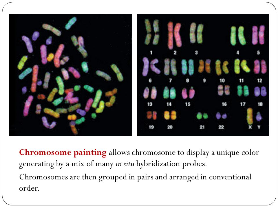 Chromosome painting allows chromosome to display a unique color generating by a mix of many in situ hybridization probes.