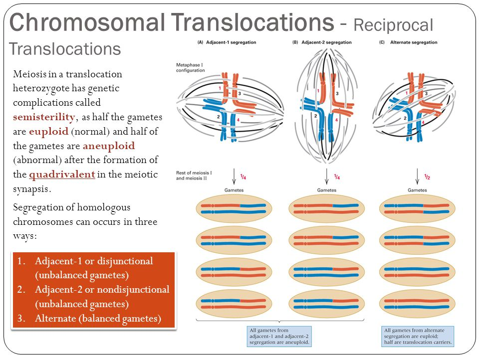 Chromosomal Translocations - Reciprocal Translocations