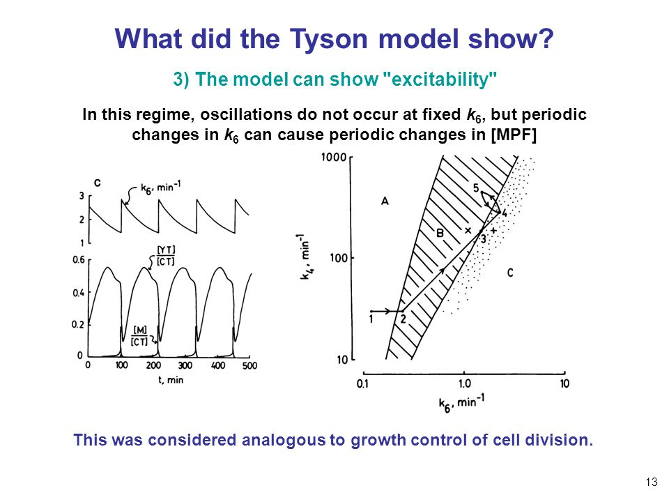 What did the Tyson model show