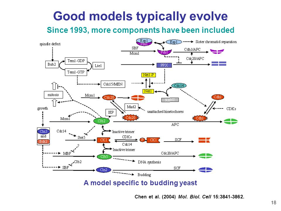 Good models typically evolve