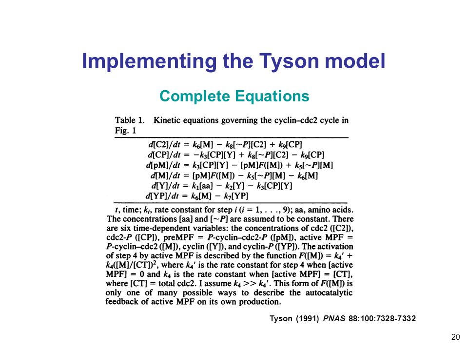 Implementing the Tyson model