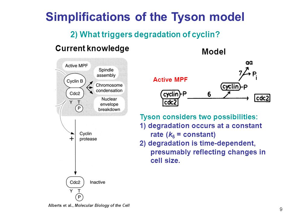 Simplifications of the Tyson model
