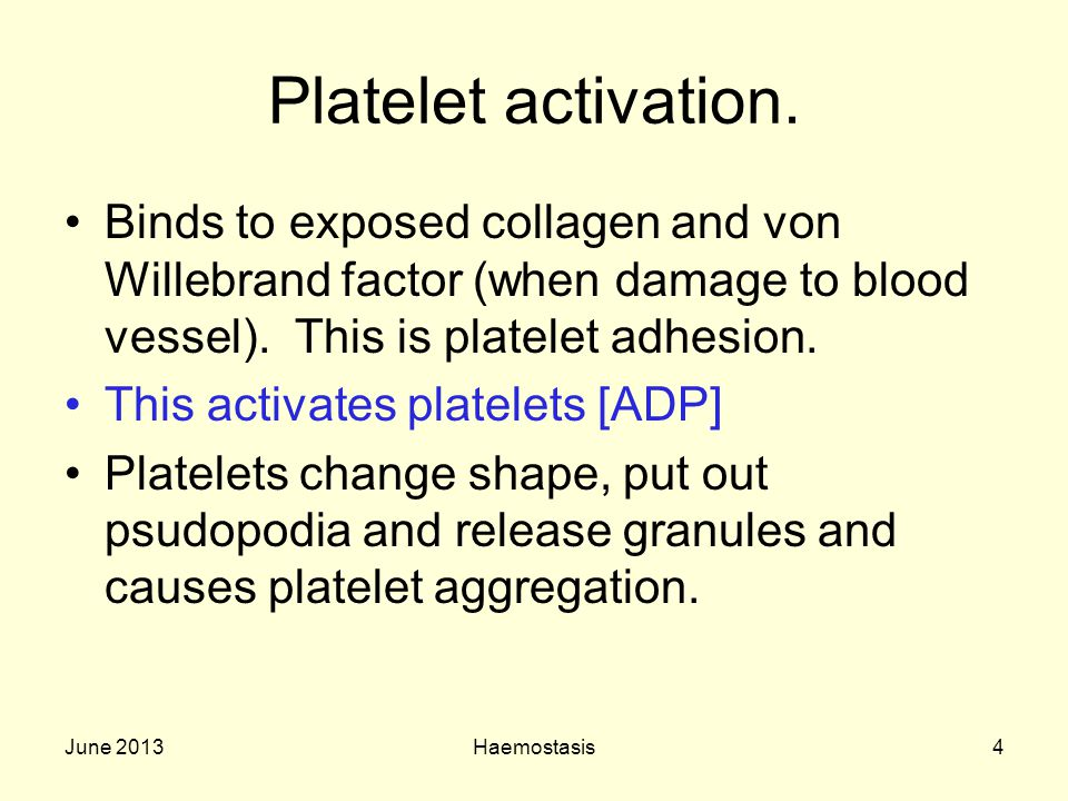 Platelet activation. Binds to exposed collagen and von Willebrand factor (when damage to blood vessel). This is platelet adhesion.