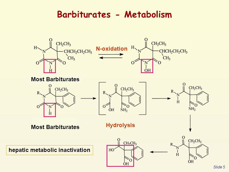 Barbiturates - Metabolism