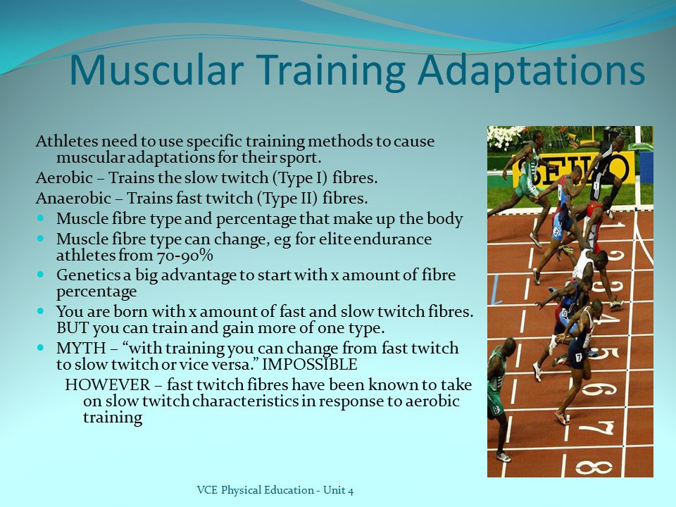 Muscular Training Adaptations