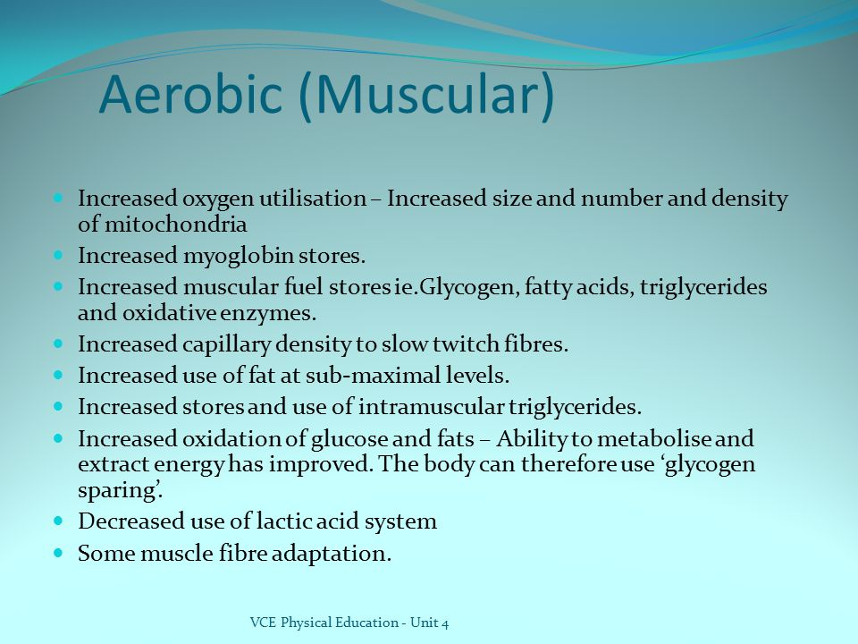 Aerobic (Muscular) Increased oxygen utilisation – Increased size and number and density of mitochondria.