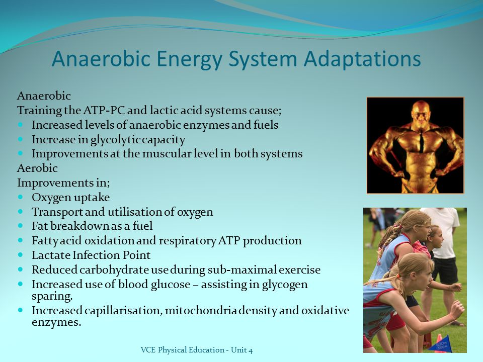 Anaerobic Energy System Adaptations
