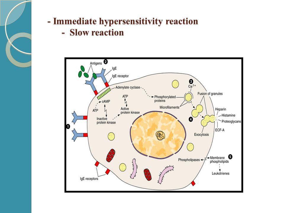 - Immediate hypersensitivity reaction - Slow reaction