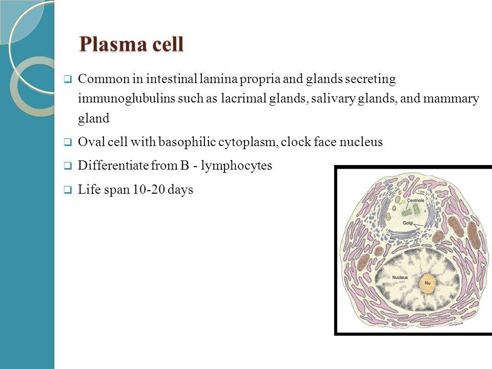 به نام خالق متعال connective tissue Dr. Zahiri. - ppt download