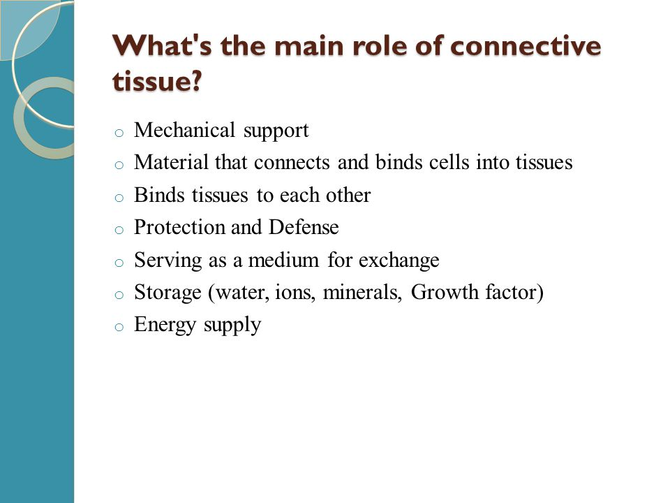 What s the main role of connective tissue