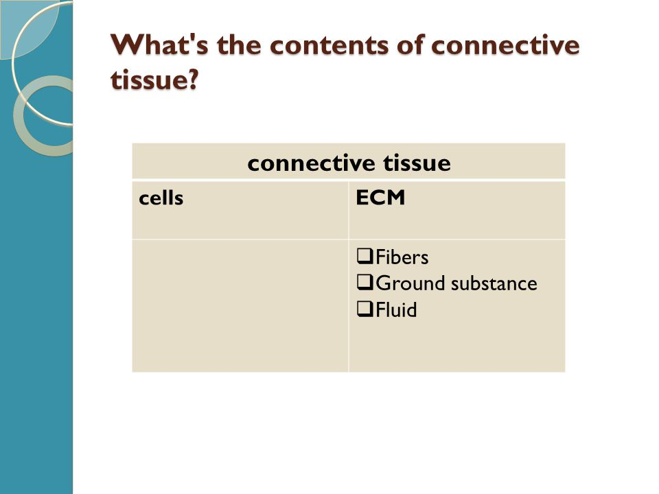 What s the contents of connective tissue