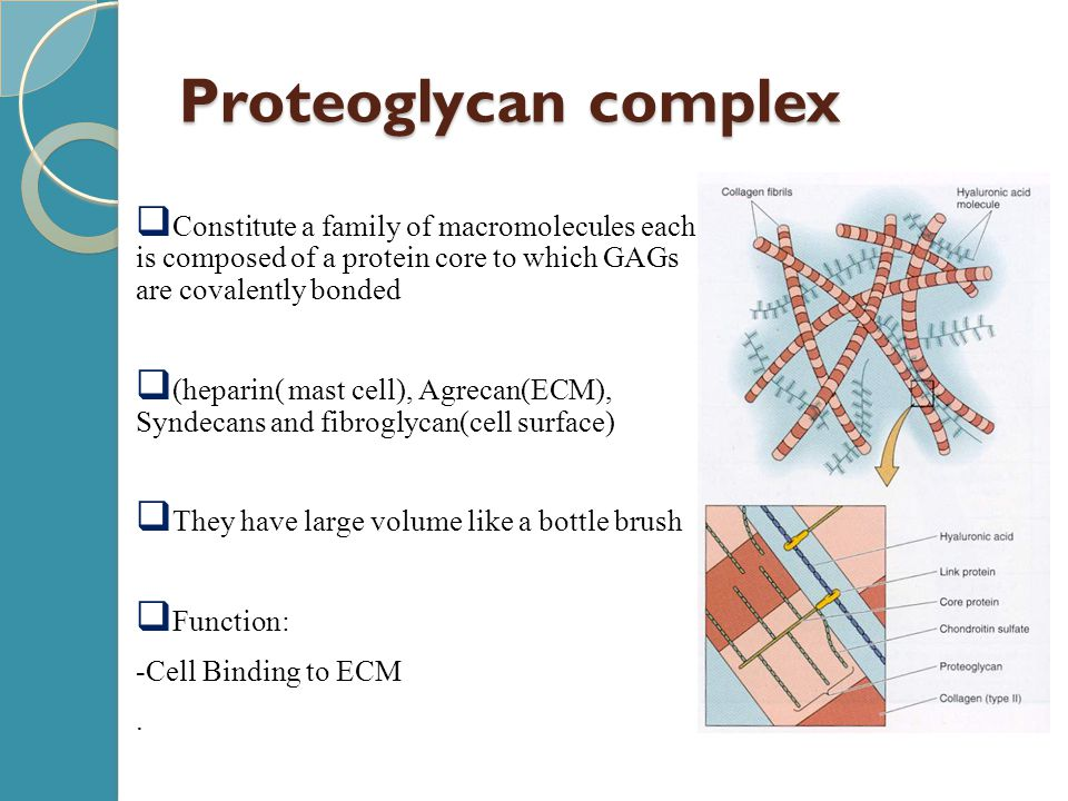 Proteoglycan complex Constitute a family of macromolecules each is composed of a protein core to which GAGs are covalently bonded.