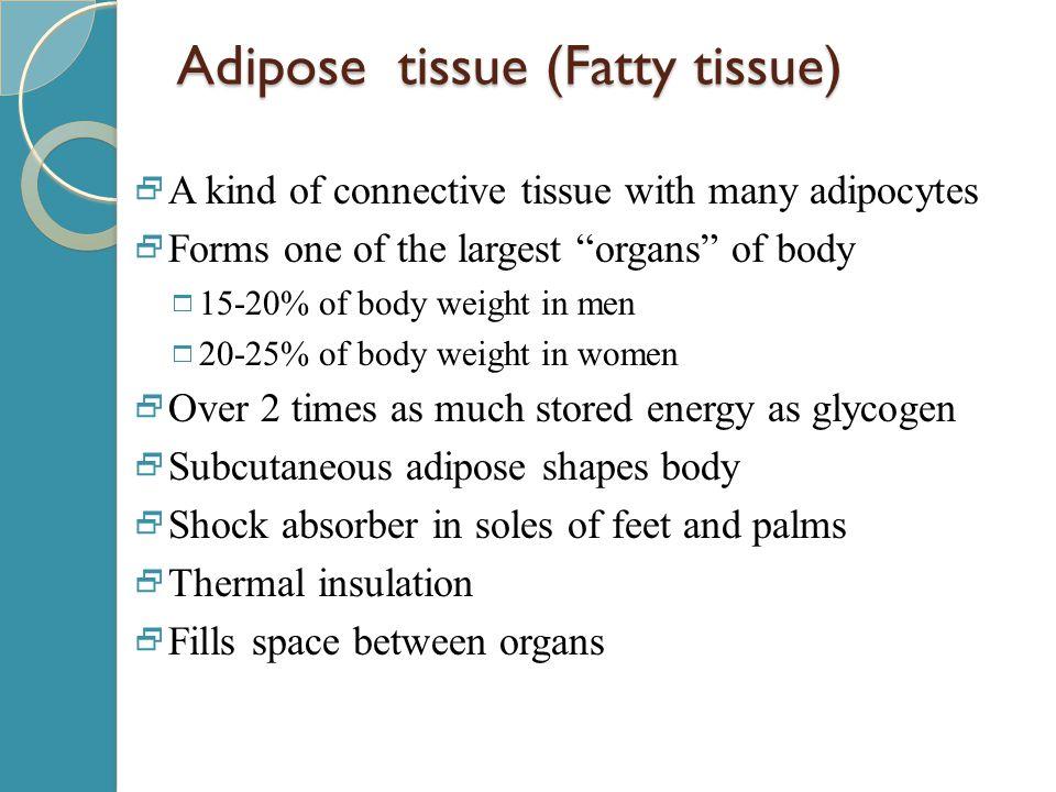 Adipose tissue (Fatty tissue)