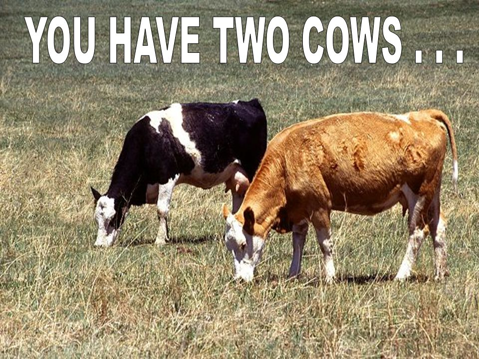 YOU HAVE TWO COWS . . .