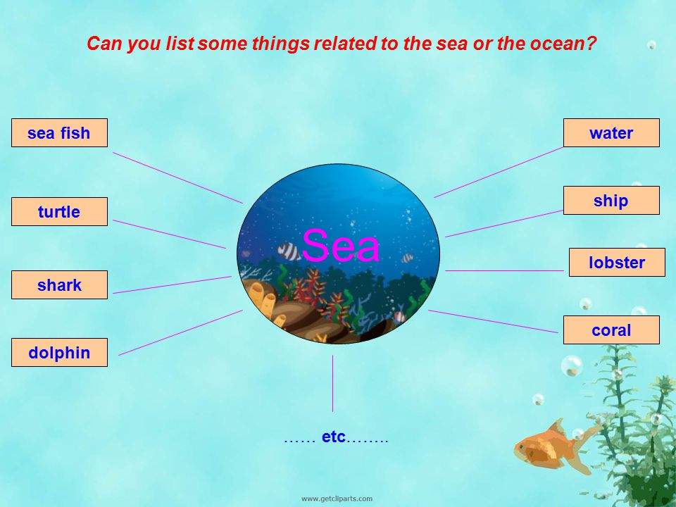 Sea Can you list some things related to the sea or the ocean sea fish