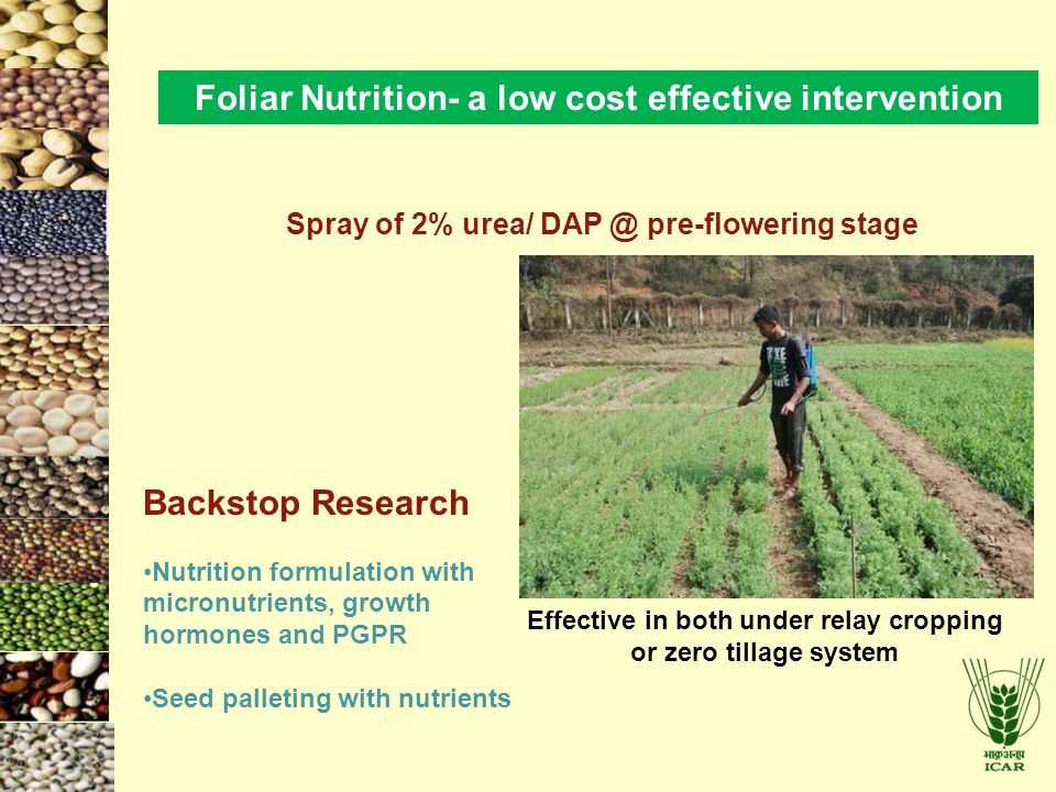 Foliar Nutrition- a low cost effective intervention