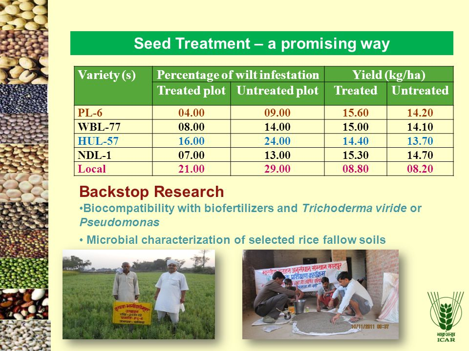 Seed Treatment – a promising way Percentage of wilt infestation