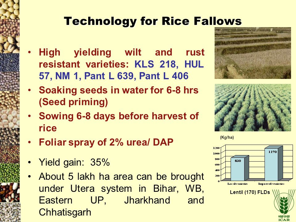 Technology for Rice Fallows
