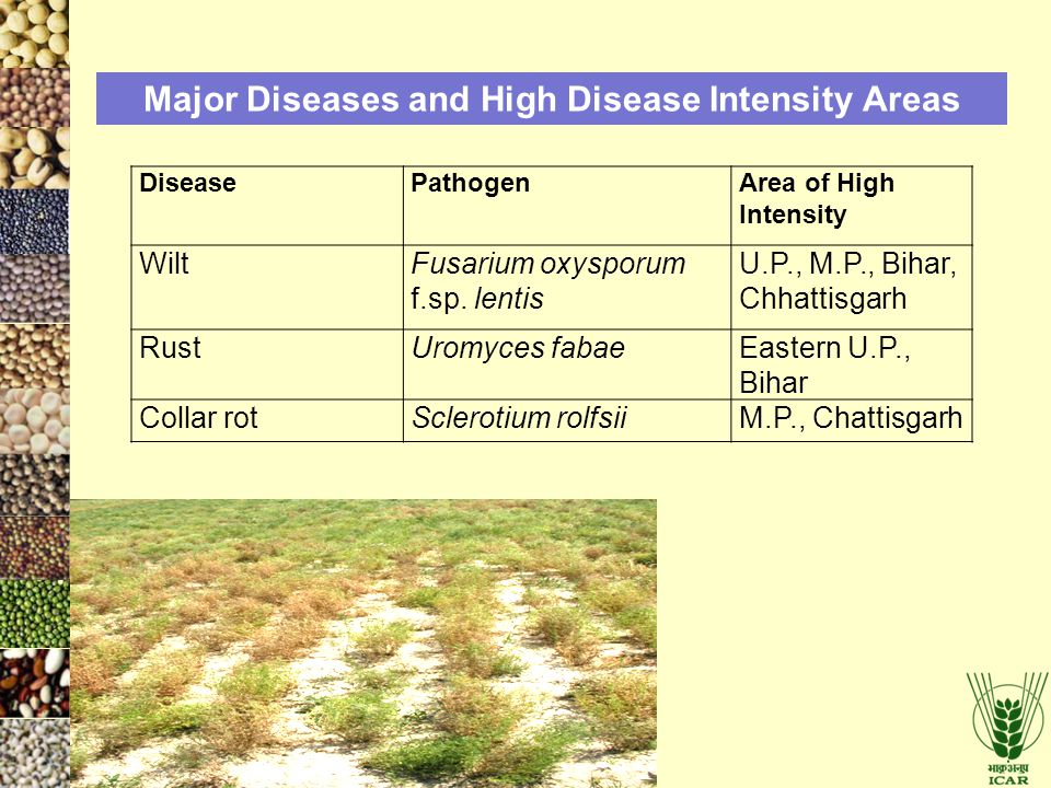 Major Diseases and High Disease Intensity Areas