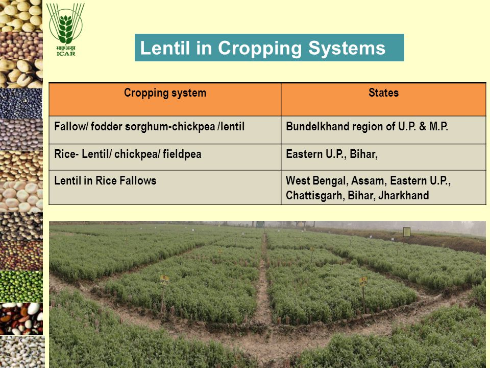 Lentil in Cropping Systems