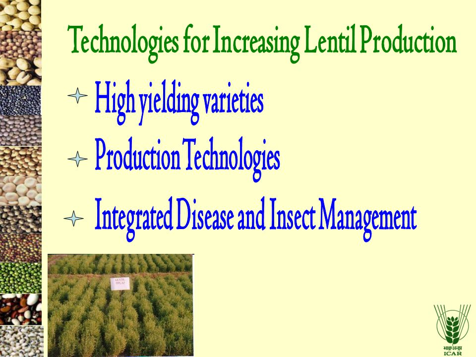 Technologies for Increasing Lentil Production