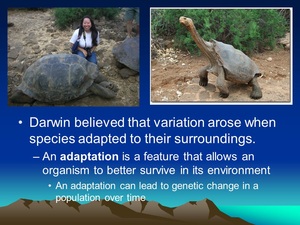 Darwin believed that variation arose when species adapted to their surroundings.