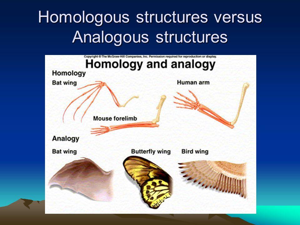 Homologous structures versus Analogous structures