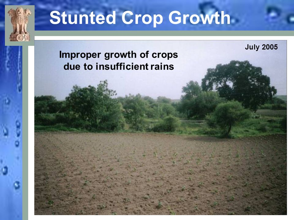 Improper growth of crops due to insufficient rains