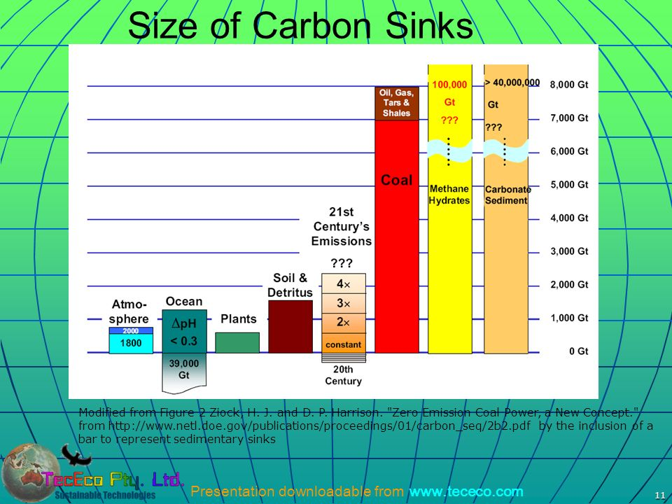 Size of Carbon Sinks