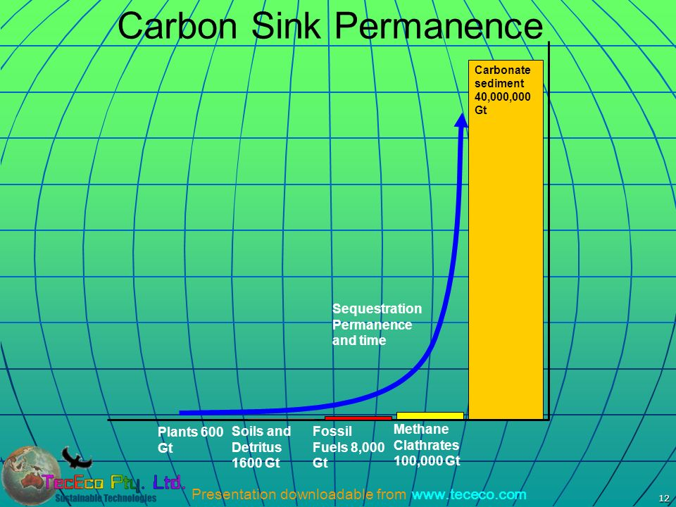 Carbon Sink Permanence