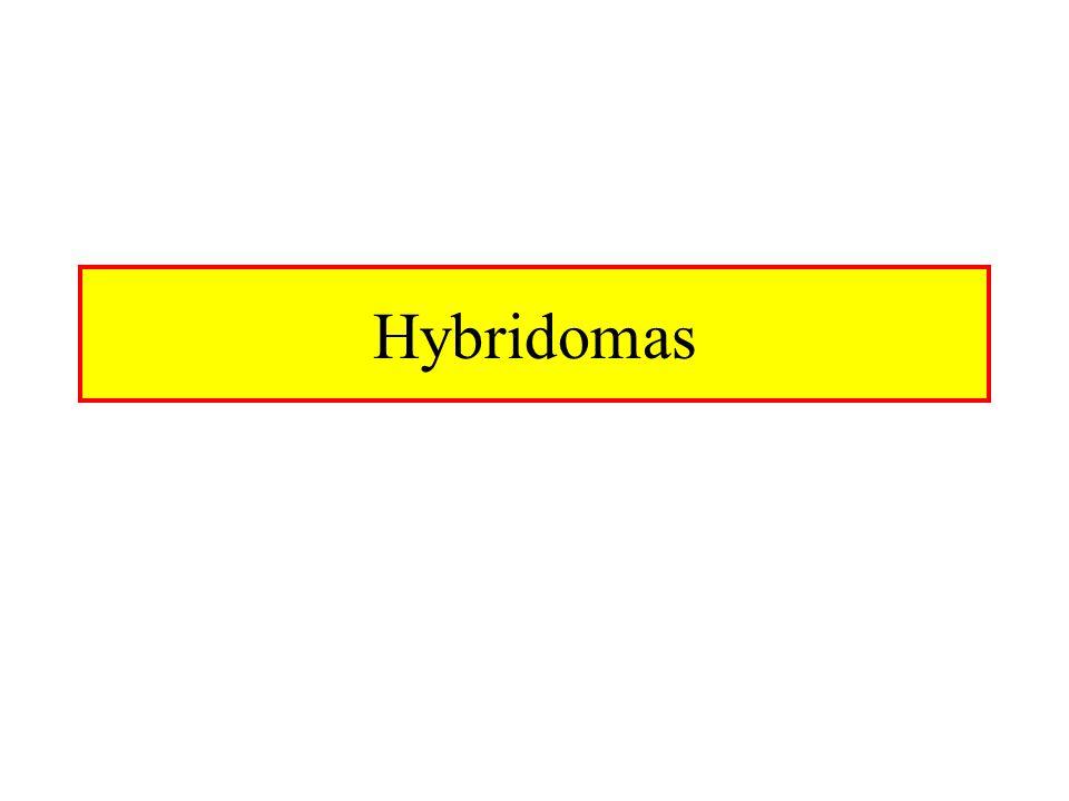 Hybridomas