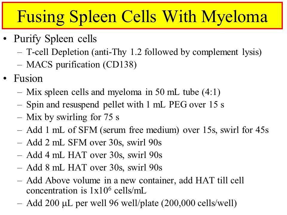 Fusing Spleen Cells With Myeloma