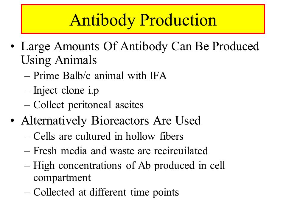 Antibody Production Large Amounts Of Antibody Can Be Produced Using Animals. Prime Balb/c animal with IFA.