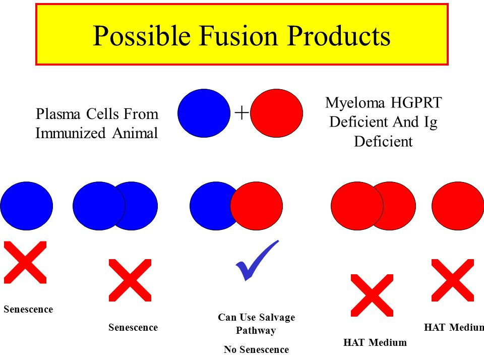 Possible Fusion Products