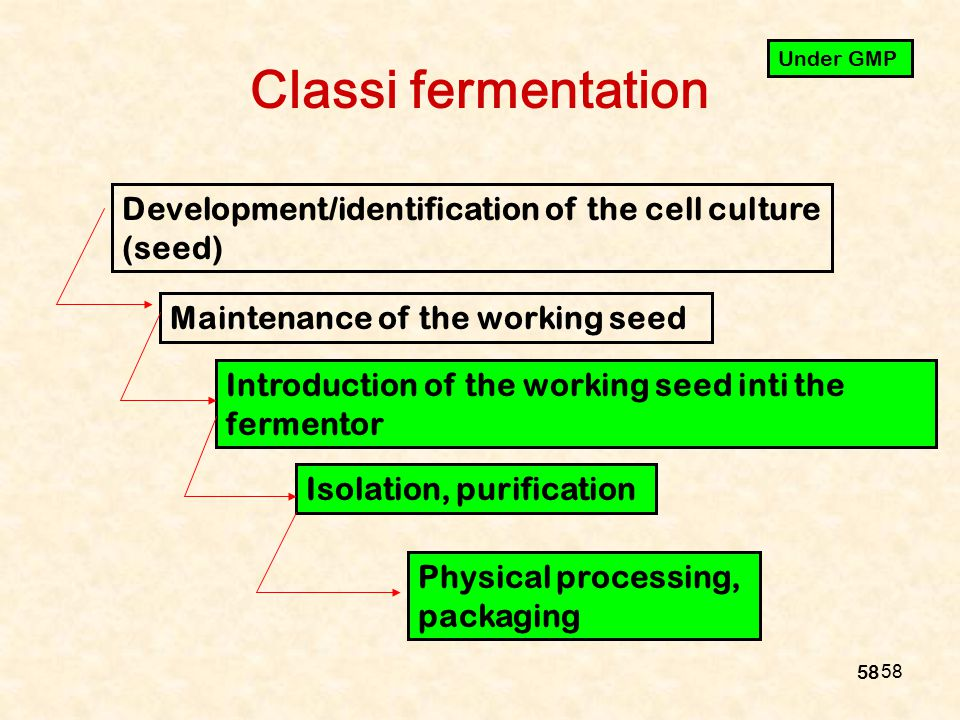 Classi fermentation Under GMP. Development/identification of the cell culture (seed) Maintenance of the working seed.