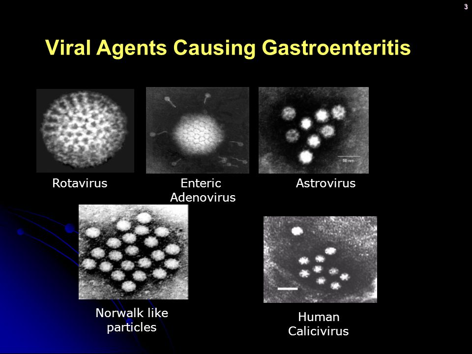 Viral Agents Causing Gastroenteritis