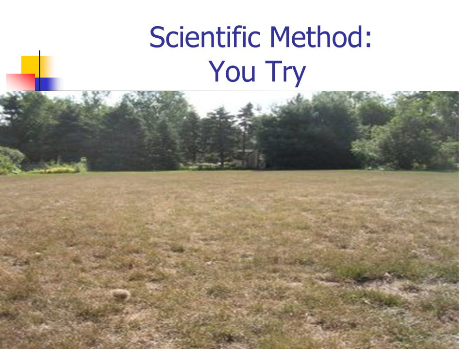 Scientific Method: You Try